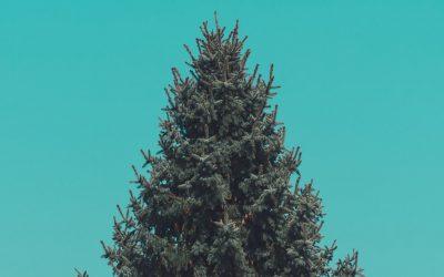 Hoe een dennenboom de relatie redde…