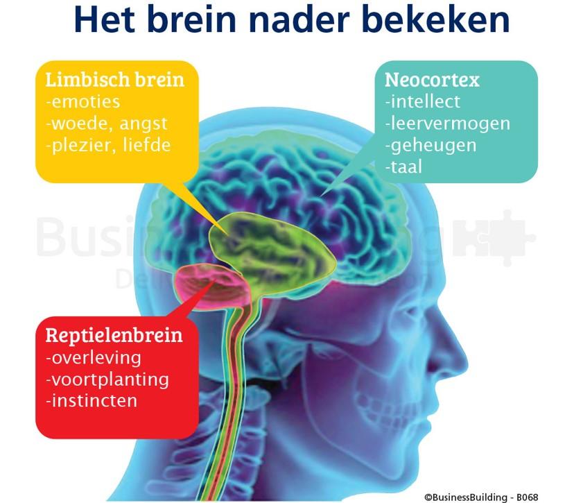 Breinkennis Neuro BusinessBuilding