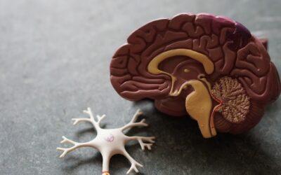 Drie praktische neuro-tips voor het realiseren van verandering